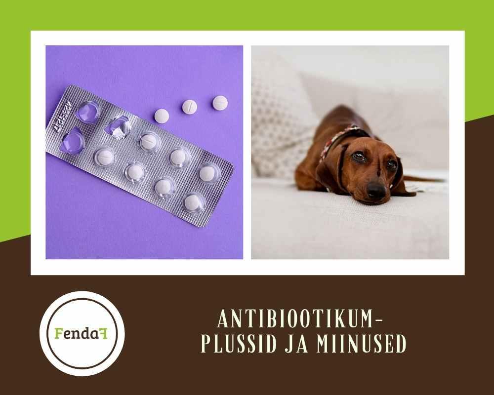 antibiootikum