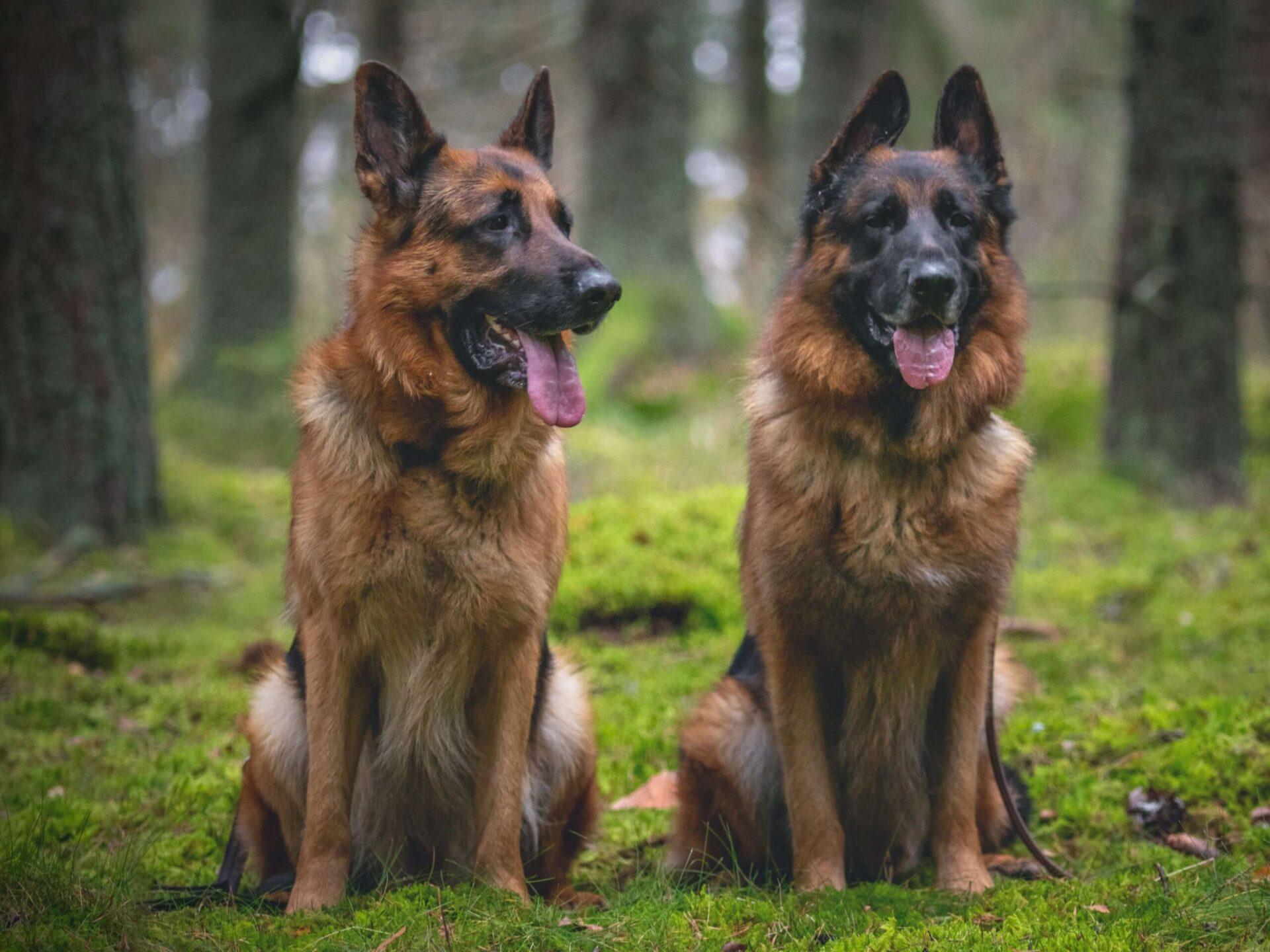 koer vs laps