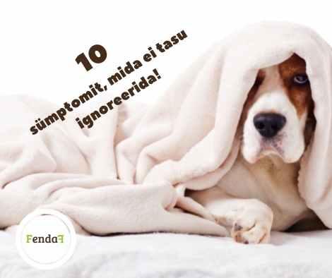 10 sümptomit